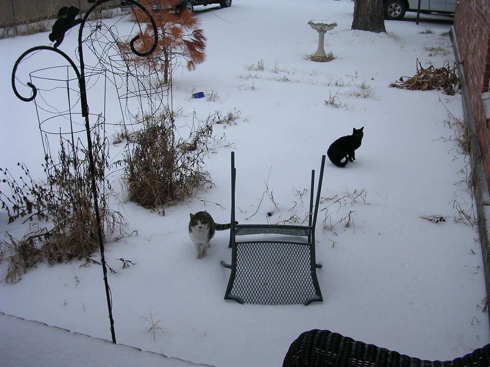 Cats in the sleet<br/><b>Community Photo By:</b> Rebekah Brown<br/><b>Submitted By:</b> rebekah, mwc