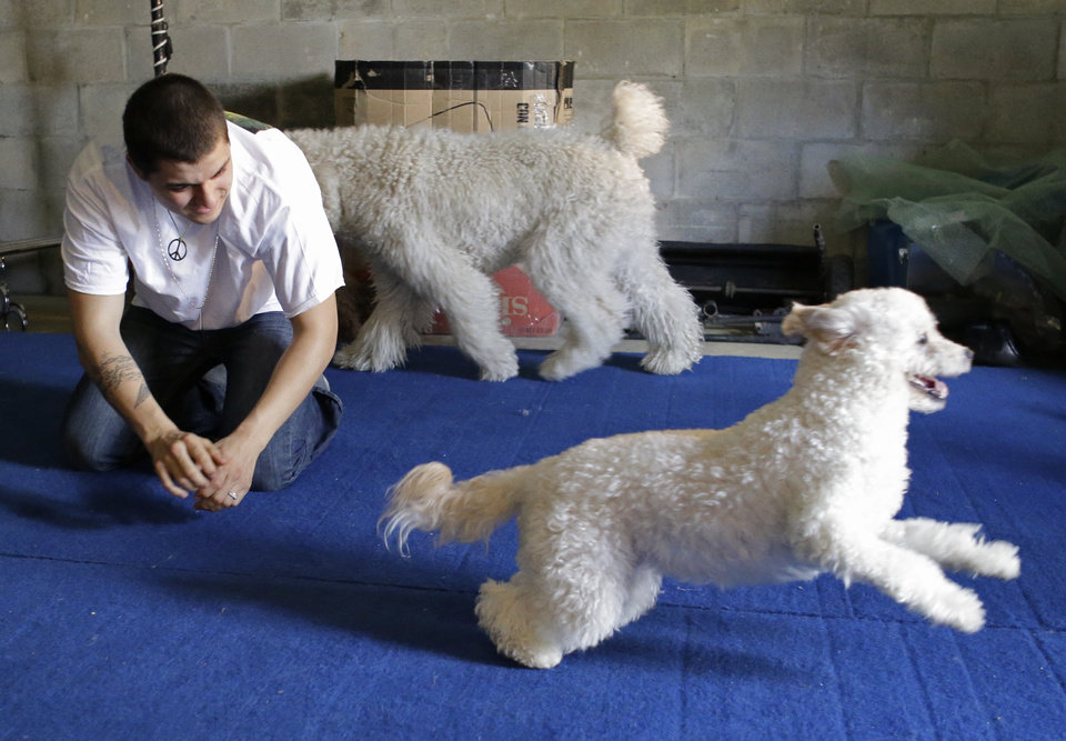 Photo - In this photo taken on Tuesday, April 22, 2014, Nicholas Olate plays with dogs Toby, front, and Oso, back, after a training session in Sorrento, Fla. The Olates spend more than 11 months a year on the road performing. (AP Photo/John Raoux)