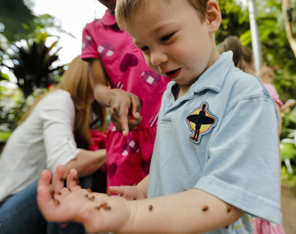 Asher Laiming reacts as ladybugs crawl up his arm during the ladybug release at the Myriad Botanical Gardens/Crystal Bridge on Tuesday, May 7, 2013, in Oklahoma City, Okla. Photo by Chris Landsberger, The Oklahoman ORG XMIT: KOD