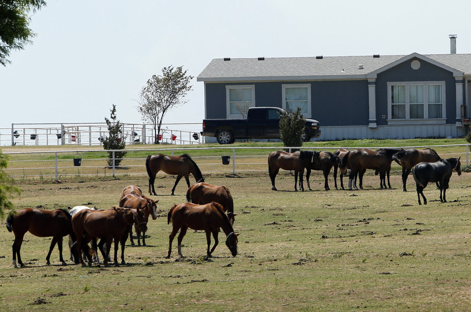 Photo - Horses graze Friday at Zule Farms, a Lexington ranch whose owners are accused of ties to a Mexican drug cartel. A judge in Texas has ruled the federal government can sell the almost 400 horses at the ranch. Photo by Steve Sisney, The Oklahoman  STEVE SISNEY