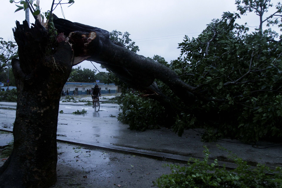 Photo -   A man rides his bicycle under the arc made by a tree knocked down by Hurricane Sandy in Gibara, Cuba, Thursday, Oct. 25, 2012. Hurricane Sandy blasted across eastern Cuba on Thursday as a potent Category 2 storm and headed for the Bahamas after causing at least two deaths in the Caribbean. (AP Photo/Franklin Reyes)