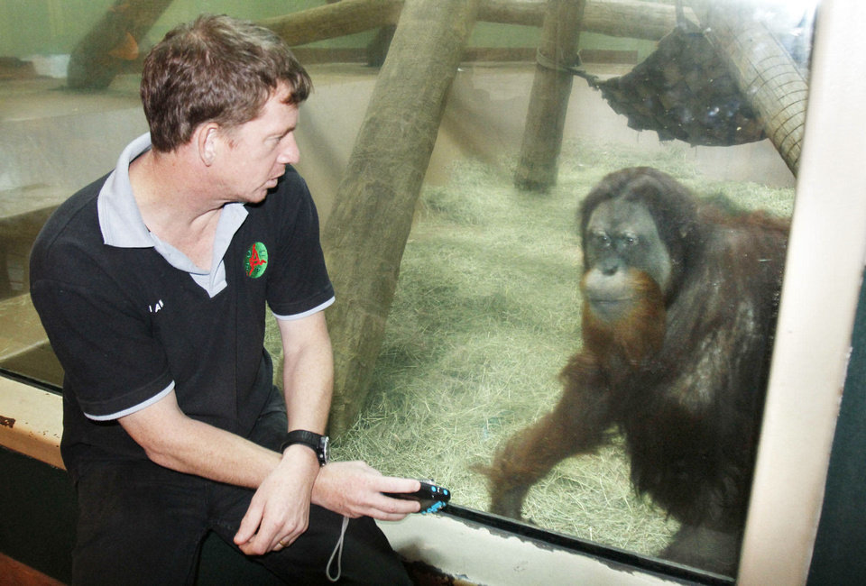 Photo - Orangutan conservationist Ian Singleton gets a close look at one of the orangutans at the Oklahoma City Zoo. Photo By Paul Hellstern, The Oklahoman