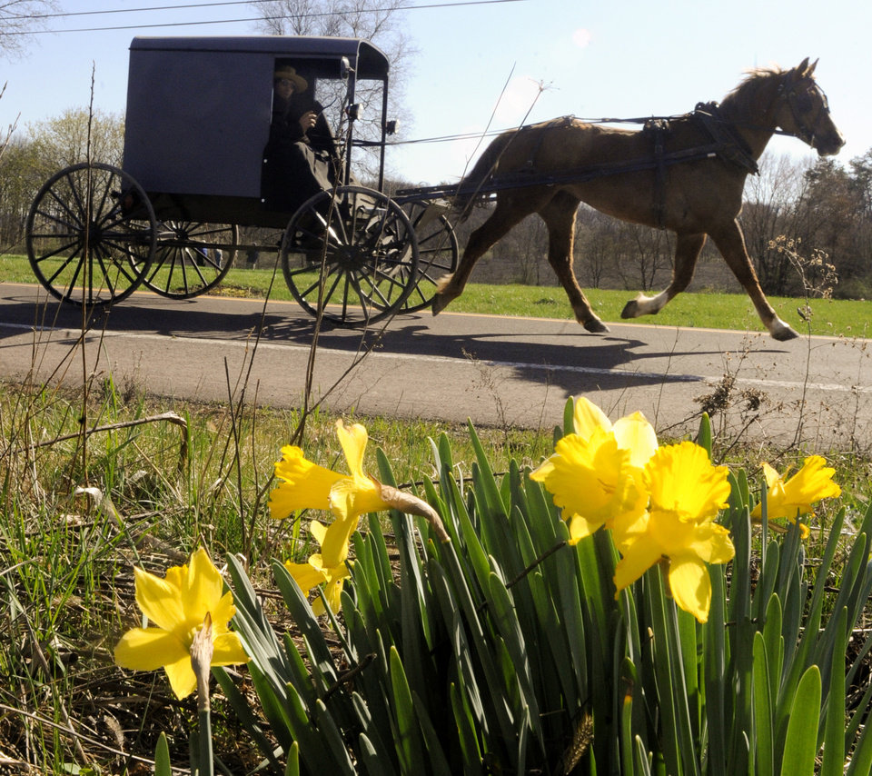 FILE - This March 27, 2012 file photo shows an Amish buggy passing a bunch of daffodils along Route 44 in Madison Township near White Hall, Pa. The harvest season is nearing its glorious end, and the culture, architecture and history of Pennsylvania\'s Amish country can be seen for free in Lancaster County, where many Amish settled, starting in the early 1700s. (AP Photo/Bloomsburg Press Enterprise, Jimmy May, file)