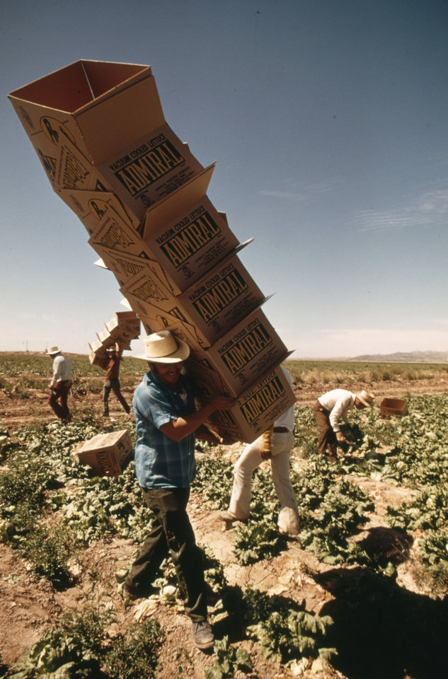Photo - This May, 1972 photo released by the National Archives, Records of the Environmental Protection Agency, shows a Mexican farm worker in a lettuce field, in Blythe, Ca. The photo is part of