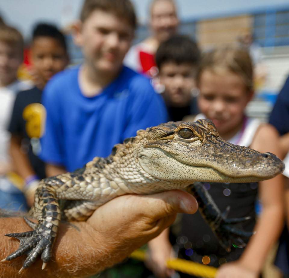 "Photo - Kids are able to get a close look at the three year old alligator during ""The Swampmaster"" gator show during the 2013 Oklahoma State Fair on Monday, Sep. 16, 2013. Photo by Chris Landsberger, The Oklahoman"