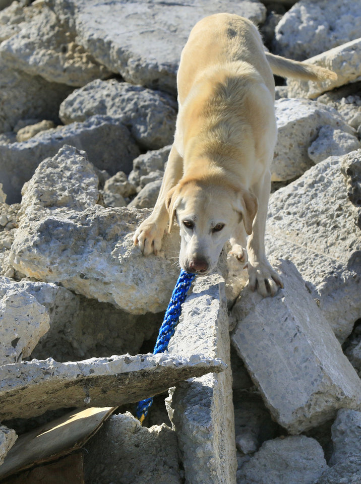 Photo -  Rescue dog Jagger finds a