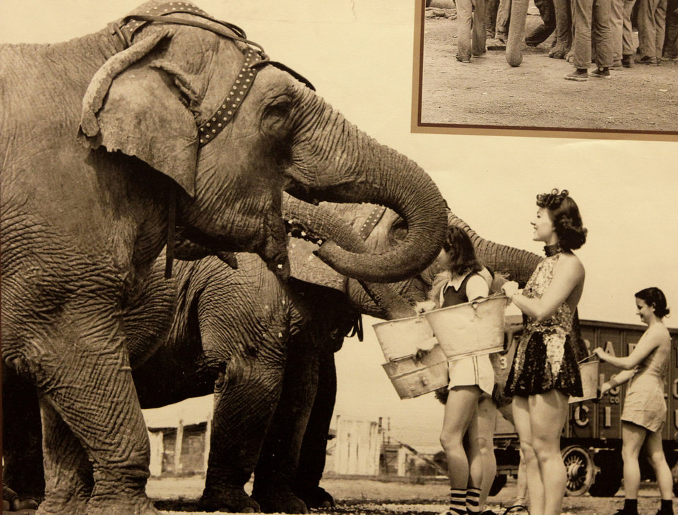 Photo - This photo of elephants is among items in the exhibit