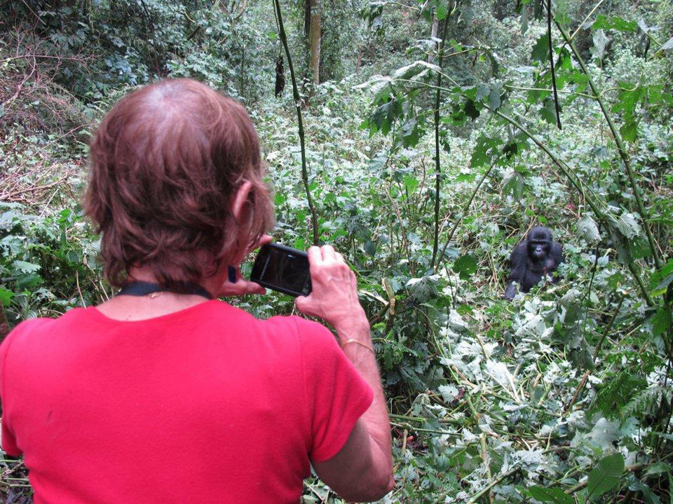Photo - An ElderTreks participant takes a picture of a mountain gorilla in Uganda. Photo courtesy of Victor Block.