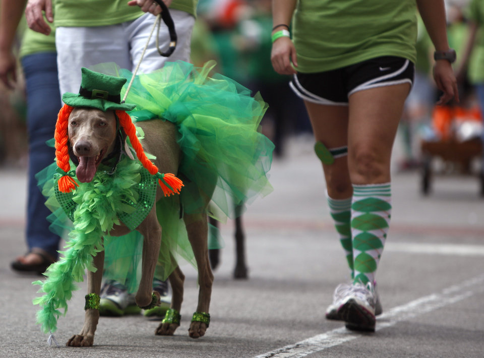 A dog walks in the St. Patrick\'s Day Parade in Oklahoma City, Saturday, March 17, 2012. Photo by Sarah Phipps, The Oklahoman.