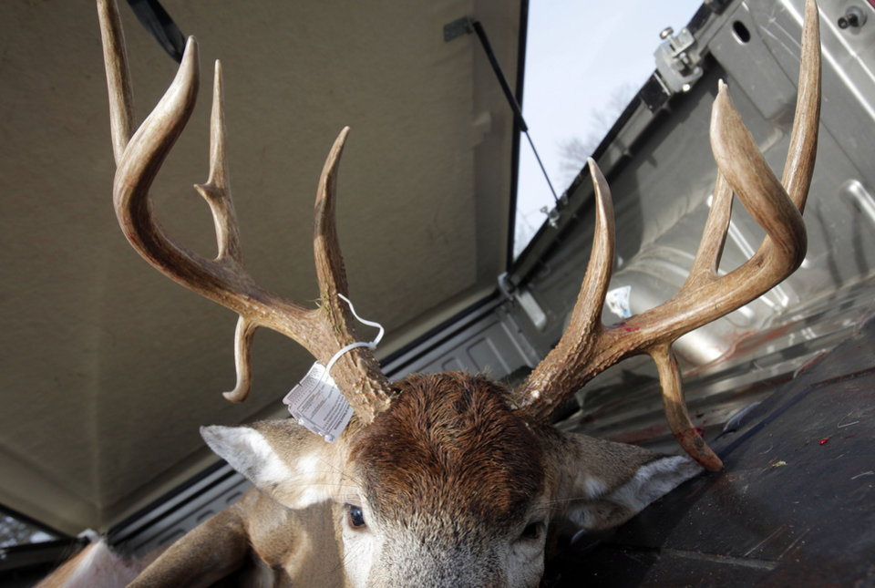 A buck with a double drop tine set of antlers shot by Randal Brainerd in Alamo Township lies in a truck of the first day of firearm deer season Thursday, Nov. 15, 2012 at the DNR check station in Plainwell, Mich.(AP Photo/The Kalamazoo Gazette, Mark Bugnaski) ALL LOCAL TV OUT; LOCAL TV INTERNET OUT