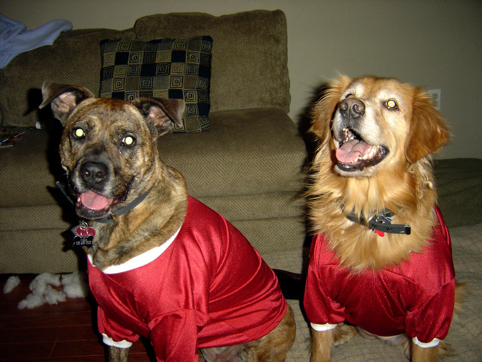 Our dogs Baylee and Tiger in their OU outfits<br/><b>Community Photo By:</b> Dean Southern<br/><b>Submitted By:</b> Jenni, Bethany