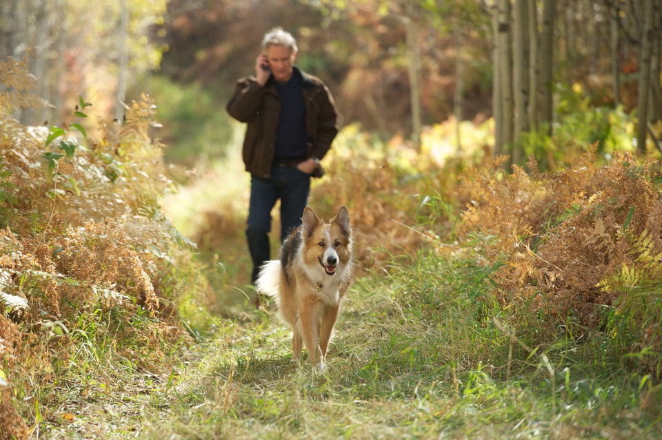 Kevin Kline and Kasey the dog appear in a scene from