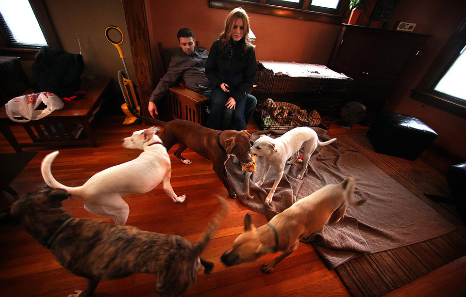 Tabitha Kelly, center, and her friend, Ben Brackman, watch a flurry of activity in the living room as a reunion of dogs play, February 9, 2013, in Minneapolis, Minnesota. Kelly owns Weston (lower left). (Jim Gehrz/Minneapolis Star Tribune/MCT)