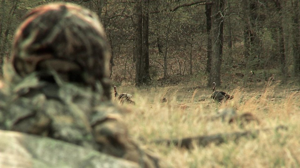 Photo - Hunters are seeing and bagging fewer Eastern wild turkeys in the woods, prompting the Oklahoma  Department of Wildlife Conservation to ask state wildlife commissioners to close the first part of spring  turkey season in eight southeastern Oklahoma counties. Commissioners are expected to vote on the proposal at their June meeting. Photo provided by Steve Easom