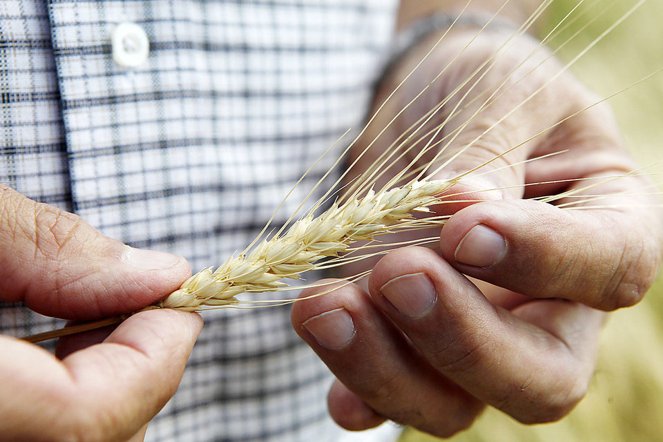 David Gammill talks about the wheat harvest. Photo By David McDaniel, The Oklahoman