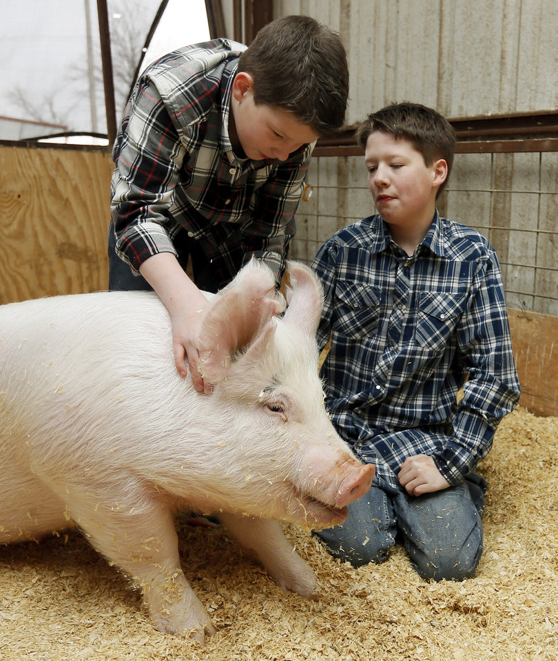 Photo -      Brothers Jacob Howell, left, and Keegan Howell pet a pig in Yukon, Okla., Wednesday, March 26, 2014. The 12-year-old brothers, who are two of three autistic triplets, participate in the Agvocates for Exeptional Individuals program. Agvocates for Exceptional Individuals helps children with special needs by teaching them to care for and exhibit livestock. Photo by Nate Billings, The Oklahoman   NATE BILLINGS