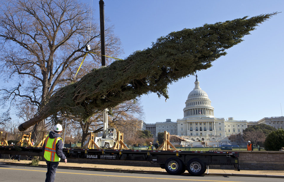 With the Capitol in the background, workers deliver the 2012 Capitol Christmas Tree, a 73 foot Engelmann Spruce from the White River National Forest, near Meeker, Colo., Monday, Nov. 26, 2012, on Capitol Hill in Washington. The 74 year-old tree will be decorated with more than 5,000 handmade ornaments and will be illuminated on Dec. 4, 2012. (AP Photo/J. Scott Applewhite)