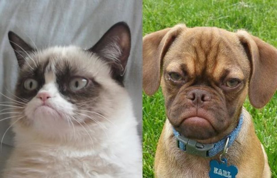 Are Cats And Dogs More Liked Than Cats And Lions