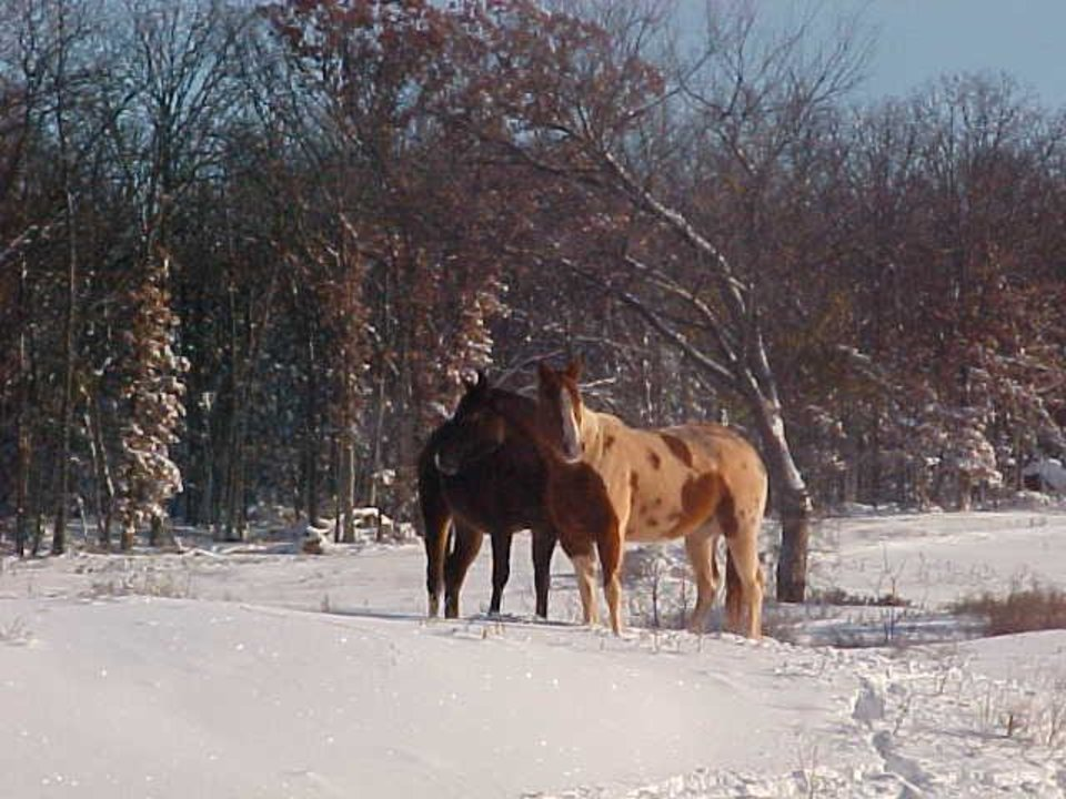 Libby, a 4 year old paint mare, and Romy a 2 yr old Arabian/Appaloosa filly standing in the snow.<br/><b>Community Photo By:</b> Alysse Foster<br/><b>Submitted By:</b> Alysse, Chandler