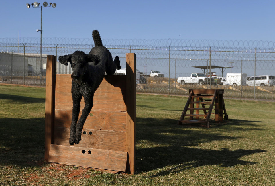 Duke jumps over an obstacle at the Lexington Assessment and Reception Center, Friday, July 11,  2013, in Lexington, Okla. Photo by Sarah Phipps, The Oklahoman