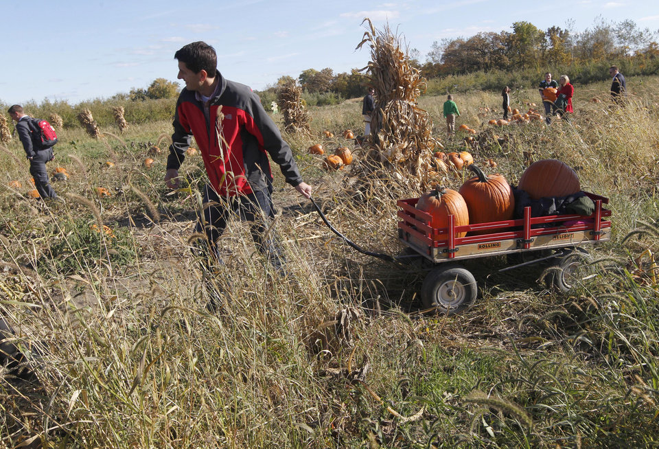 Photo -   Republican vice presidential candidate, Rep. Paul Ryan, R-Wis., pulls a wagon with pumpkins his family picked at the Apple Holler farm pumpkin patch, Sunday, Oct. 7, 2012 in Sturtevant, Wis. (AP Photo/Mary Altaffer)