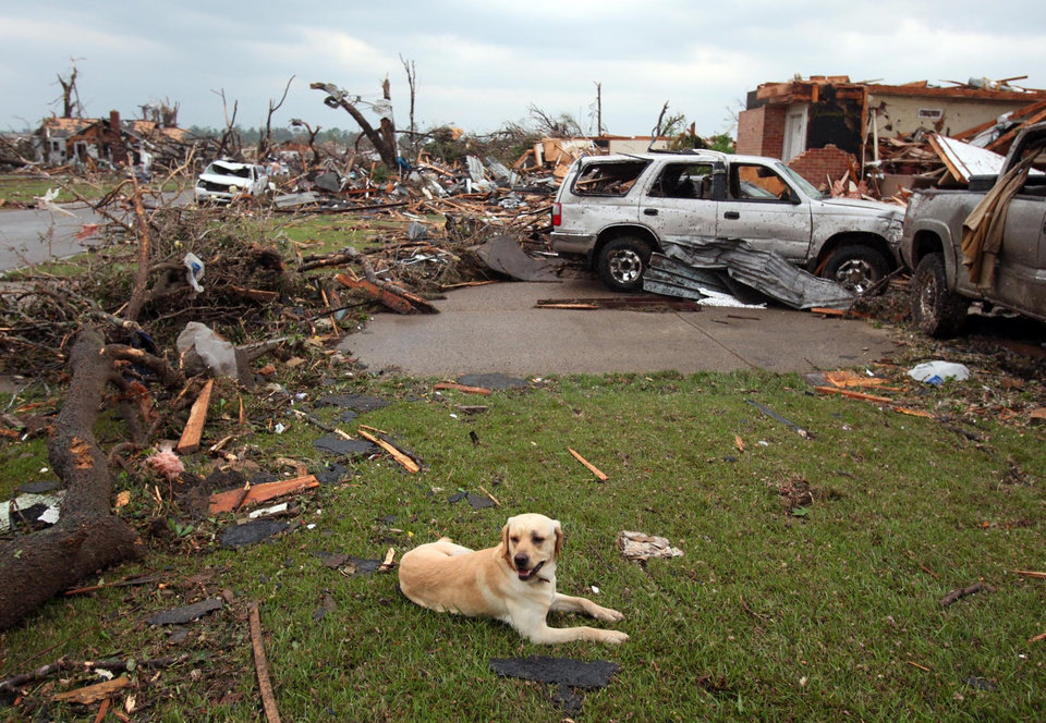 Photo - A misplaced dog is seen among debris in Tuscaloosa, Ala. Wednesday, April 27, 2011. A wave of severe storms laced with tornadoes strafed the South on Wednesday, killing at least 16 people around the region and splintering buildings across swaths of an Alabama university town. (AP Photo/The Tuscaloosa News, Dusty Compton)