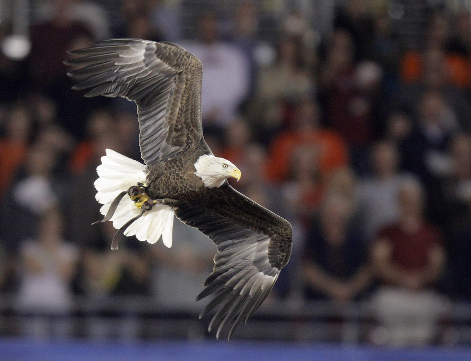 BIRD WATCHING: A Challenger, an American bald eagle, was let loose during Tamika Sonja Lawrence\'s rousing national anthem. He soared above the crowd and landed on his handler\'s arm on cue, just as the Star-Spangled Banner ended. Fiesta officials say Challenger is the only bald eagle in U.S. history trained to free-fly into sports stadiums during the anthem. Now that\'s a pregame flyover.