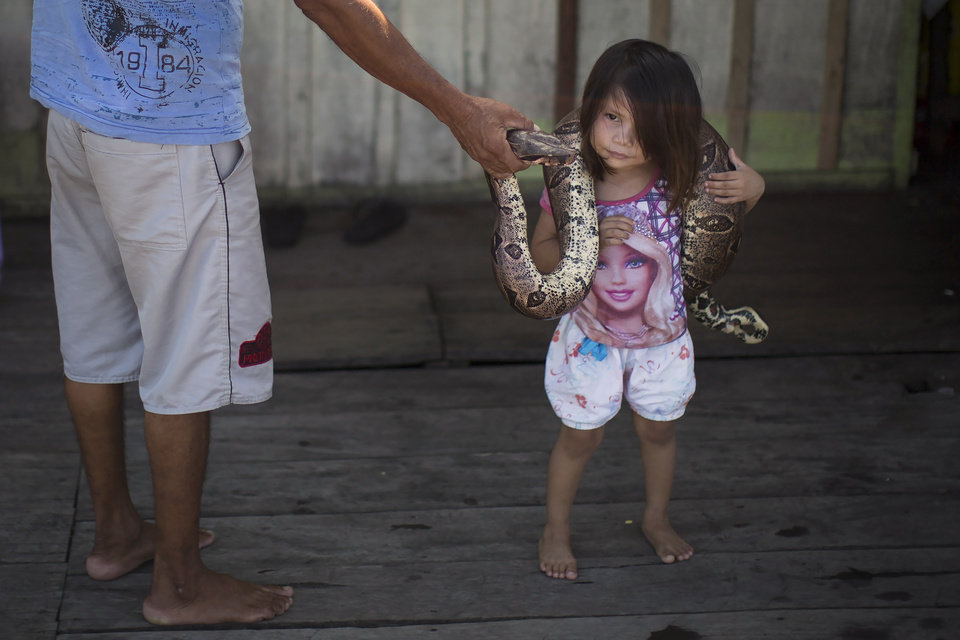 Photo - In this May 20, 2014 photo, Evandro Correia da Silva, left, holds a snake as his 3-year-old daughter Kelly Silva places it around her neck on their family's floating house in the Lago do Janauari, or Solimoes River, near Manaus, Brazil. Their exotic houseguests help the 35-year-old fisherman and his family eke out a living on the opposite bank from Manaus, a World Cup host city where the U.S., English and Italian teams will be among those battling it out. (AP Photo/Felipe Dana)