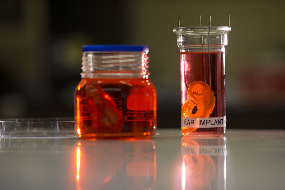 Photo - A synthetic polymer nose, left, and ear are posed to be photographed at a research facility in the Royal Free Hospital in London, Monday, March 31, 2014.  In a north London hospital, scientists are growing noses, ears and blood vessels in the laboratory in a bold attempt to make body parts using stem cells. It is among several labs around the world, including in the U.S., that are working on the futuristic idea of growing custom-made organs in the lab. While only a handful of patients have received the British lab-made organs so far— including tear ducts, blood vessels and windpipes — researchers hope they will soon be able to transplant more types of body parts into patients, including what would be the world's first nose made partly from stem cells.