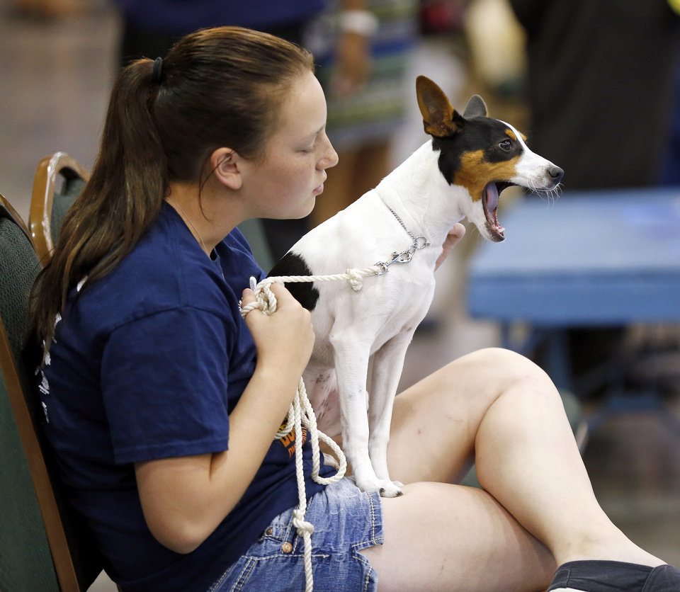 Photo -  DeAnna Edwards, of Harrah, holds Tickles, a rat terrier, Wednesday during the OKC Summer Classic Dog Show at the Cox Convention Center in downtown Oklahoma City. Tickles was waiting to be shown for the first time. The dog show continues through Sunday. Photo by Nate Billings, The Oklahoman   NATE BILLINGS -