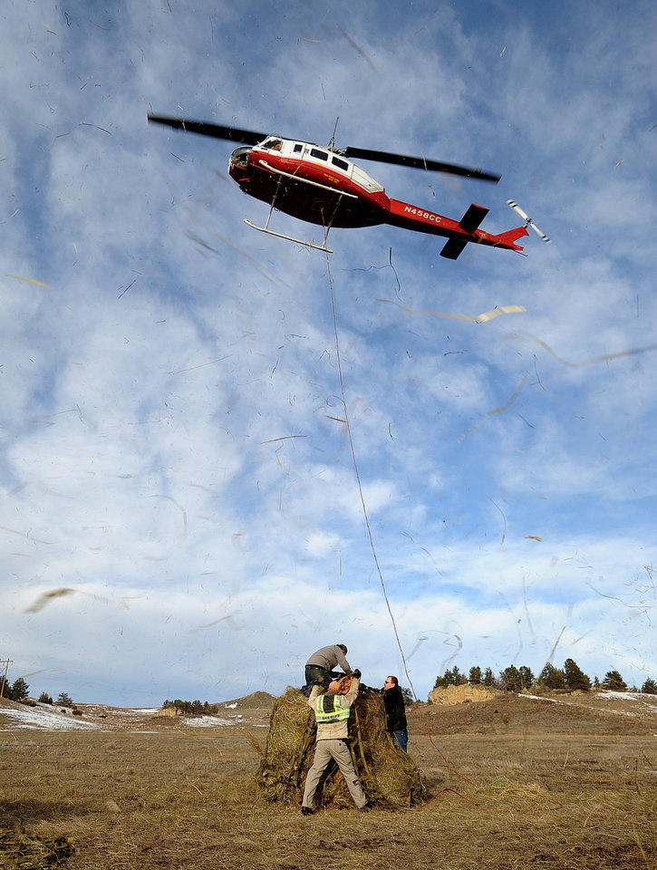 Hay flies through the air as Al and A.J. Blain, of Billings Flying Service, use a helicopter to haul hay to horses on the former Leachman Cattle Company ranch east of Billings on Thursday, Jan. 27, 2011. The Billings Gazette reports that the Northern International Livestock Exposition had collected $10,000 in cash donations and about 250 tons of hay by Thursday. Five dead horses have been found on the ranch. A Montana veterinarian had warned that others would start dying off in droves if they did not receive food soon. The horses belong to James H. Leachman, who has filed for bankruptcy. Leachman is scheduled to appear Friday on multiple charges of animal cruelty. (AP Photo/Billings Gazette, Larry Mayer)