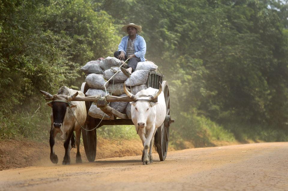 """In this Nov. 14, 2012 photo, a coal maker transports bags of coal using an oxen-drawn cart near Curuguaty, Paraguay. The """"Massacre of Curuguaty"""" on June 15 killed 11 farmers and 6 police officers when negotiations between farmers occupying a rich politician's land ended with a barrage of bullets. The underlying dispute that set up the clash was decades in the making. The area's poor residents have long alleged that the land was effectively stolen from the state by Sen. Blas Riquelme, a leader of the Colorado Party that backed dictator Alfredo Stroessner from 1954 to 1989, and has dominated the nation's politics ever since. (AP Photo/Jorge Saenz)"""