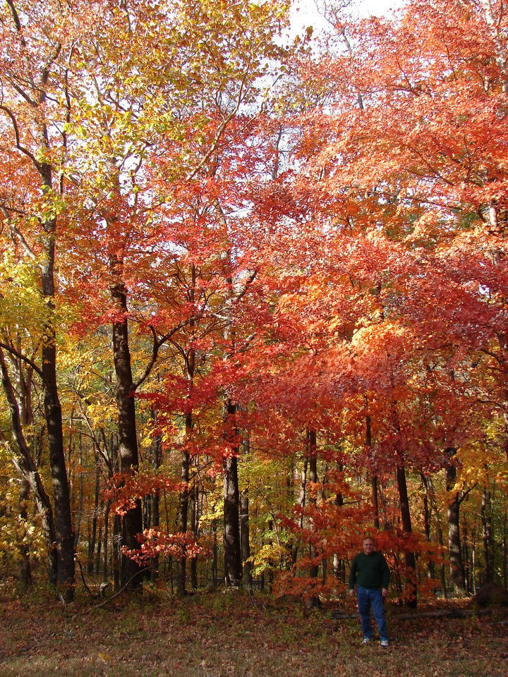 Another shot of gorgeous foliage on Talemena Drive!  Fall 2006. No alterations at all---person is hubby, Tony Jimenez. Thanks!<br/><b>Community Photo By:</b> Victoria Jimenez<br/><b>Submitted By:</b> Victoria, Harrah