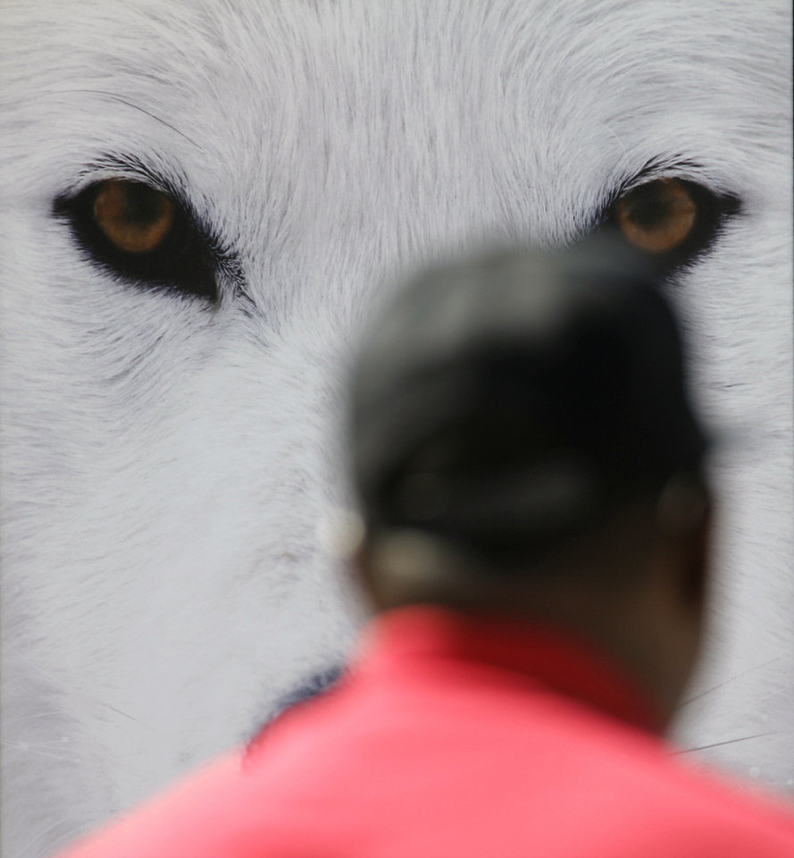 """Arctic Eyes,"" a photograph by Randy Napier of Grafton, N.D., watches over visitors  during the last day of the Festival of the Arts in Oklahoma City. Napier will also be featured at the Edmond Arts Festival.  Photo by Doug Hoke, The Oklahoman <strong>DOUG HOKE - THE OKLAHOMAN</strong>"