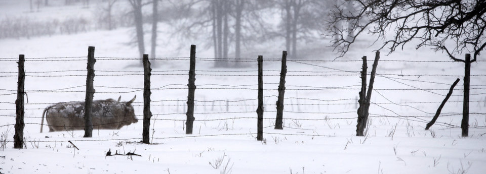 Photo - A bull walks a fence line near E. Charter Oak Rd. in Logan County, Oklahoma February  1, 2011. Photo by Steve Gooch, The Oklahoman