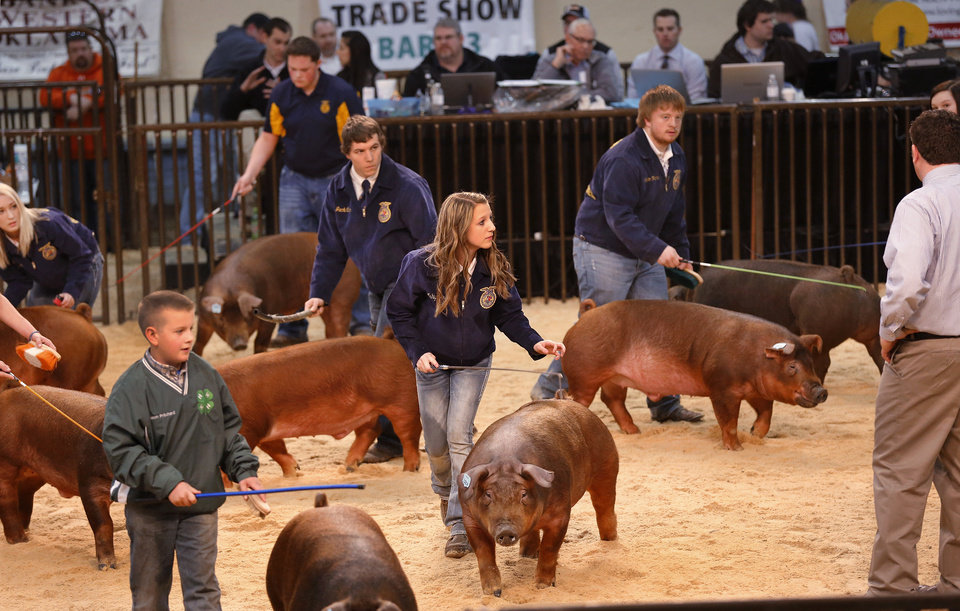 Photo - Young people parade their hogs in front of a judge at the Oklahoma Youth Expo at State Fair Park on Tuesday,   March 18, 2014.  Photo by Jim Beckel, The Oklahoman