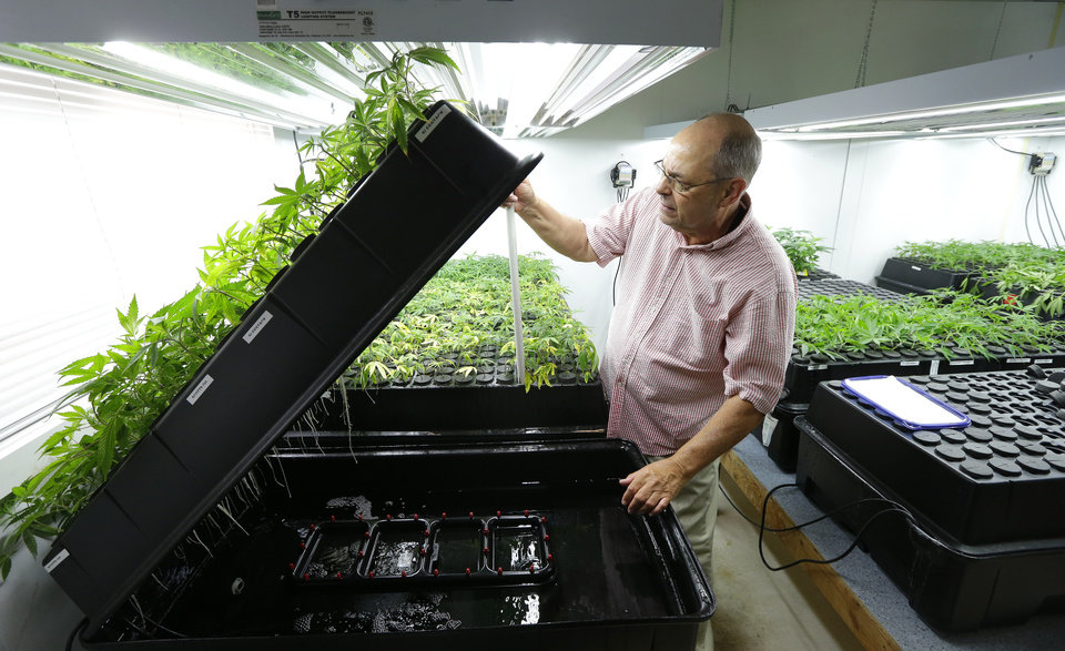 Photo - In this June 25, 2014, photo, Bruce Cummins, the clone room manager at Sea of Green Farms, a recreational pot grower in Seattle, checks on his tiny plants, which are kept in a continuous water bath until their roots develop. They are also monitored for mites and other pests. (AP Photo/Ted S. Warren)