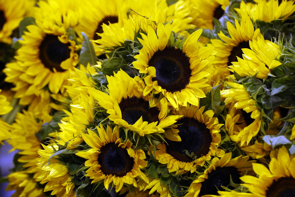 Photo - Sunflowers are displayed as preparation for the annual Philadelphia Flower Show are made at the Pennsylvania Convention Center, Thursday, Feb. 27, 2014, in Philadelphia. The nation's largest flower show will feature huge horticultural displays inspired by the work of artists such as Matisse, Mondrian, Calder and Kandinsky.