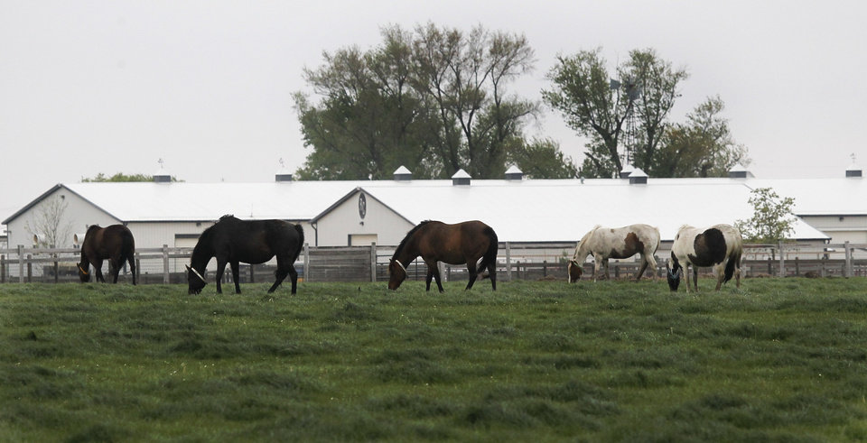 FILE - In this April 20, 2012, photo, horses graze at Rita Crundwell's horse ranch outside of Dixon, Ill. Crundwell is accused of stealing $53 million from the small city in northern Illinois by siphoning public funds into a secret bank account opened in 1990 while she was Dixon's comptroller. A judge on Thursday, May 3, 2012, granted the government's request for forfeiture of the 311 animals owned by Crundwell, which are now in the care of U.S. marshals. Federal prosecutors contend she used the funds to sustain a lavish lifestyle and her horse breeding operation. Crundwell was regarded as one of the best horse breeders in the country. (AP Photo/Charles Rex Arbogast, File)