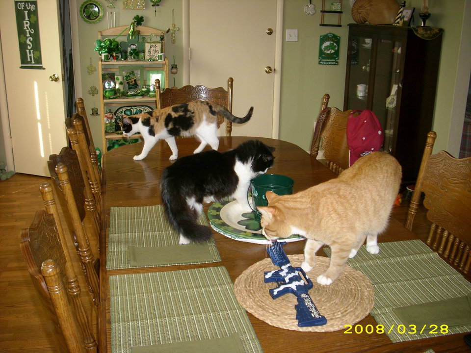 This is Chunky Monkey, Callie and Mattie looking for table scraps.<br/><b>Community Photo By:</b> Kelli Smith<br/><b>Submitted By:</b> kelli, midwest city