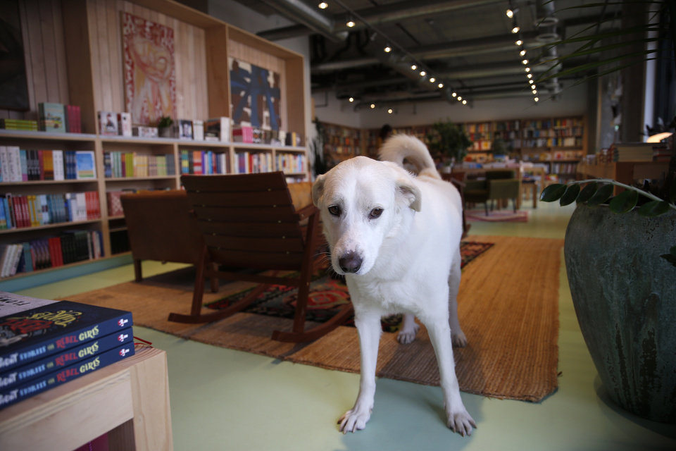 Photo -  Boz is among the most beloved staff at Commonplace Books in Oklahoma City. [Photo by Sarah Phipps, The Oklahoman]