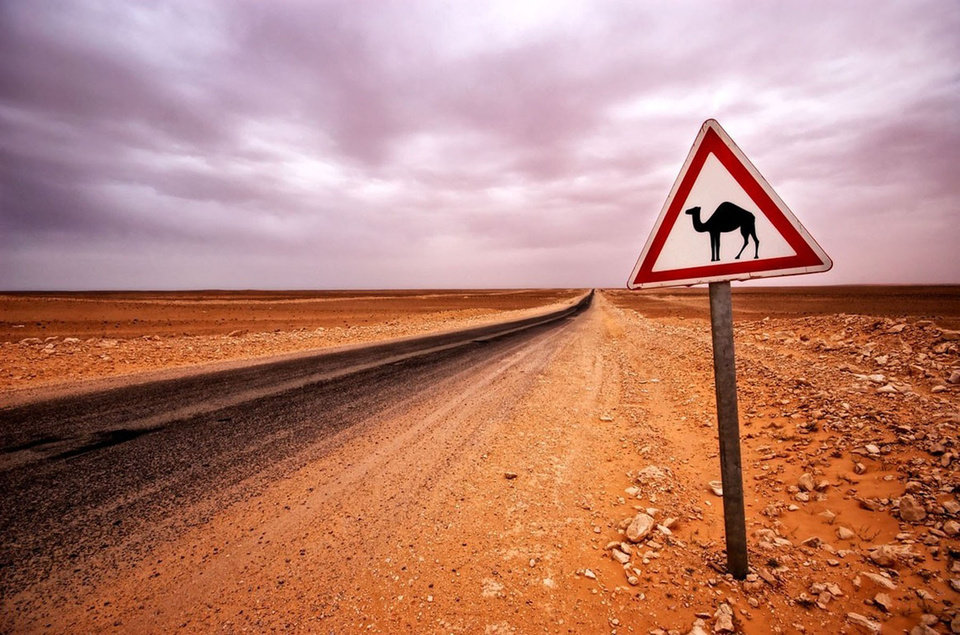 Photo -  It isn't unusual to see a sign warning about camels in the area in Australia's Outback. Photo courtesy of Steve Murray.