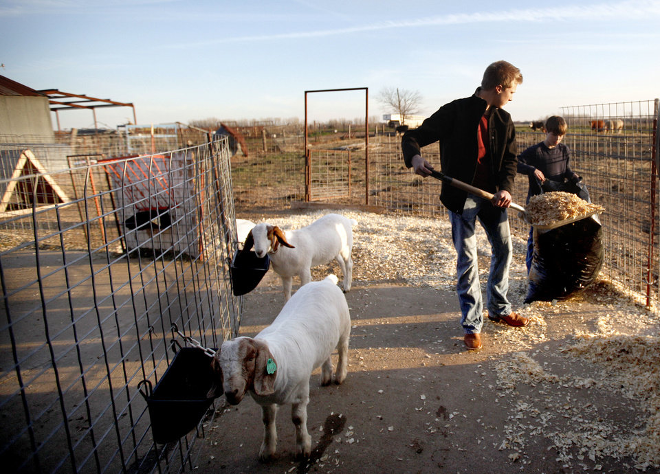 Photo - Carson, left, and Garrett Lough clean their goat stall in Hennessey.  Photos by Sarah Phipps, The Oklahoman