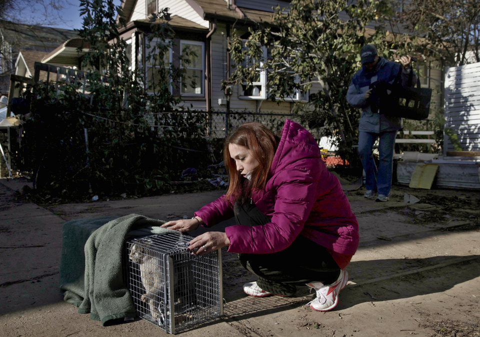 FILE - In this Nov. 6, 2012, file photo, Dina McKenzie traps a stray cat in the New Dorp section of the Staten Island borough of New York. After Superstorm Sandy passed through, McKenzie was working with two animal rescue groups to help displaced homeowners find their pets and catch strays that need care. (AP Photo/Seth Wenig, File)