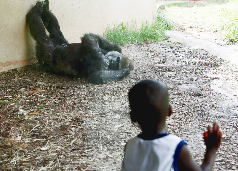 Tevin Fountain, 3, of Midwest City watches a gorilla during taxpayer appreciation day Friday at the Oklahoma City Zoo. Photo by Sarah Phipps, The Oklahoman