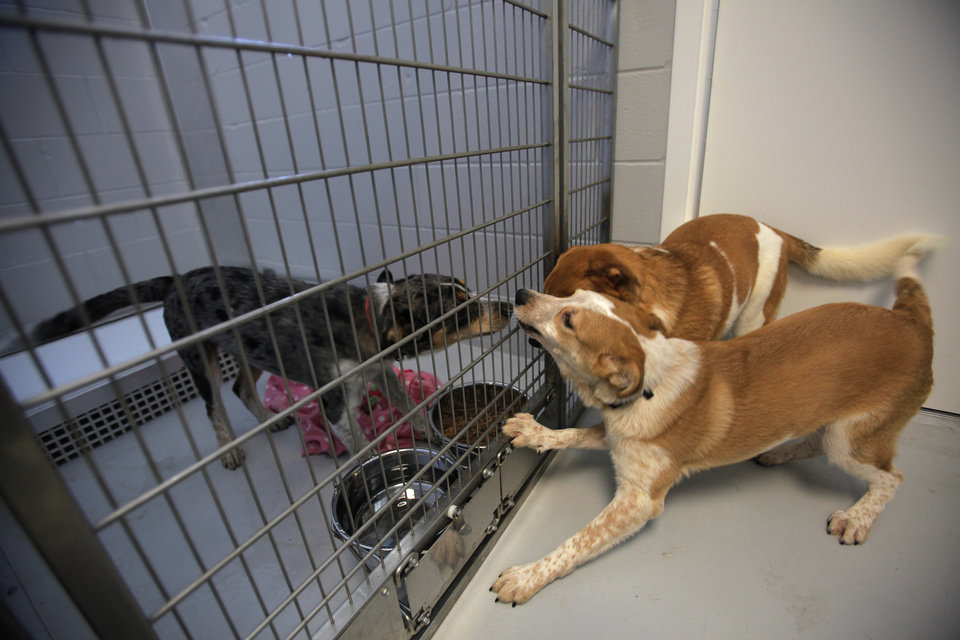 Basha and Mason interact with Bandit at the Steven J. Bentley Homeward Bound Facility in Oklahoma City, Friday, June 29, 2012.  Photo by Garett Fisbeck, The Oklahoman