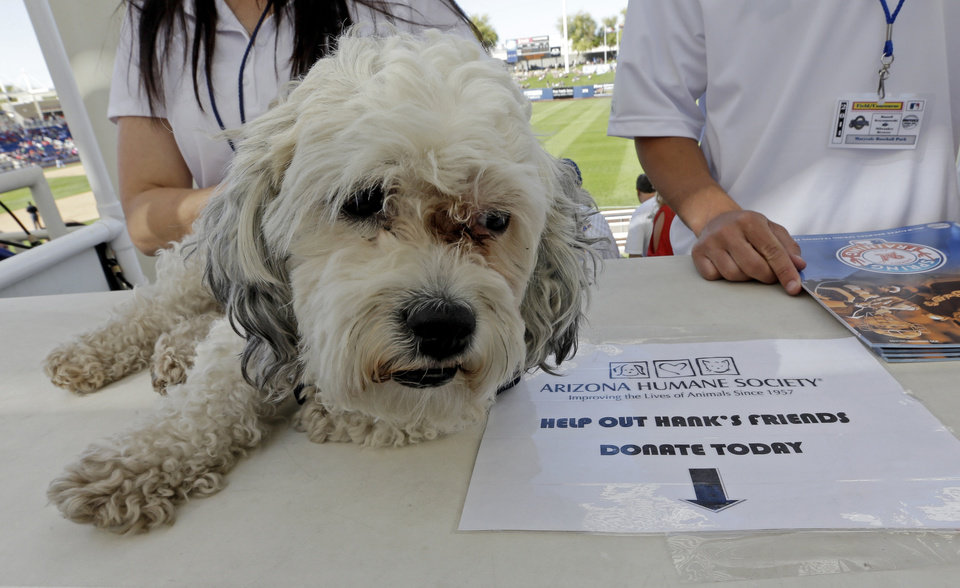 Photo - The Milwaukee Brewers unofficial mascot, Hank, waits to be photographed with fans during an exhibition spring baseball game against the Cincinnati Reds, Saturday, March 15, 2014, in Phoenix. (AP Photo/Morry Gash)