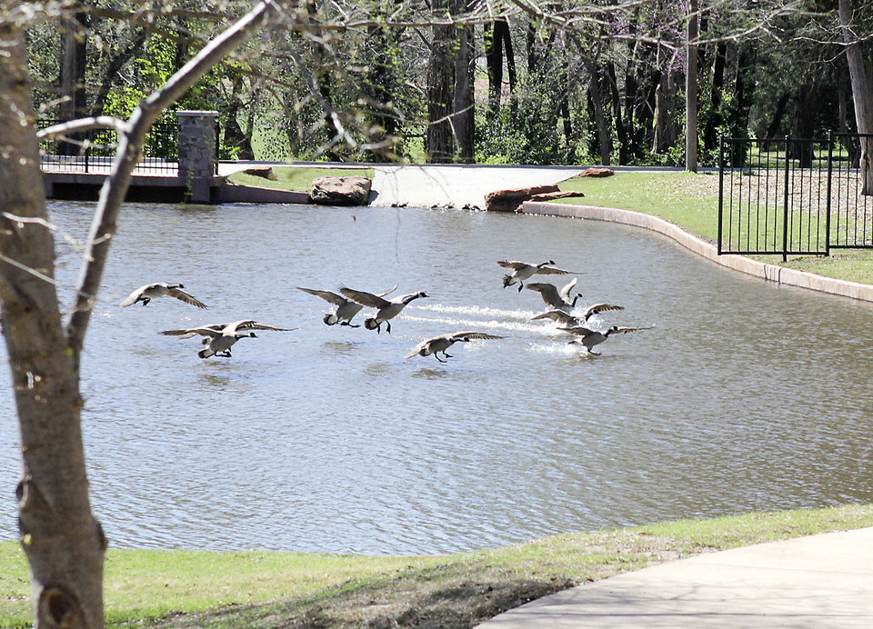 Geese land Friday on a pond at the newly improved arboretum at Will Rogers Gardens. Oklahoma City celebrates Arbor Week next week. The city is a Tree City USA community, and the improvements at the gardens are an example of the city�s efforts to get more out of its trees. See story, Page 13A.  Photo by Paul Hellstern, The Oklahoman