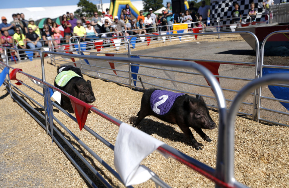 Photo - People cheer on pig during the swift Swine pig races at the last day of the Oklahoma State Fair in Oklahoma City, Sunday, Sept. 22, 2013. Photo by Sarah Phipps, The Oklahoman