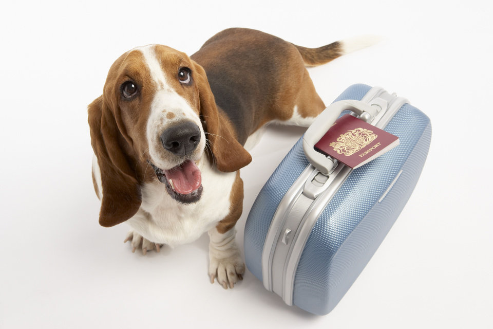Photo - Dog with suitcase and passport